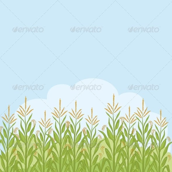 Field with Maize