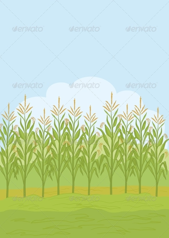 Field with Maize - Landscapes Nature