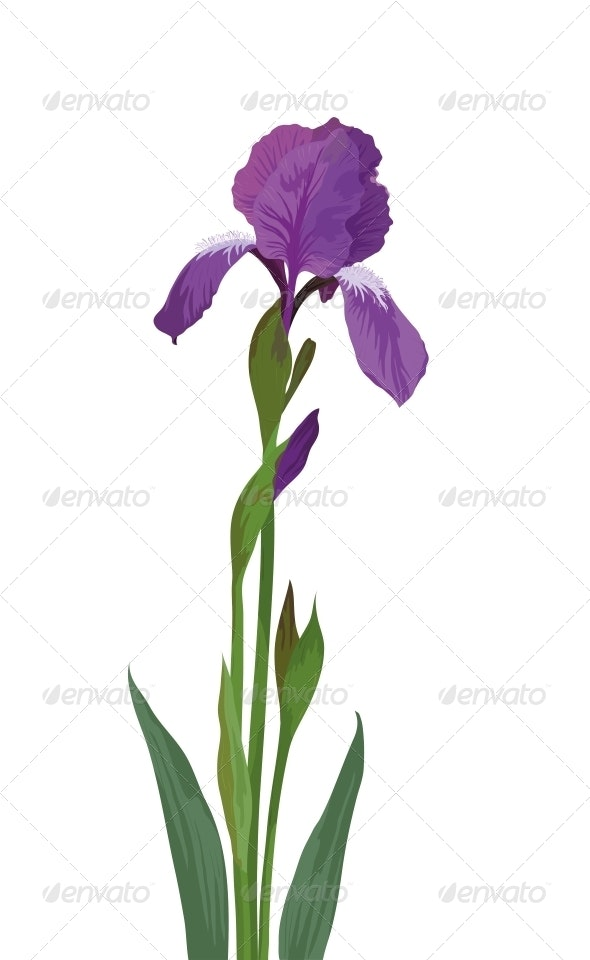 Flower Iris - Flowers & Plants Nature
