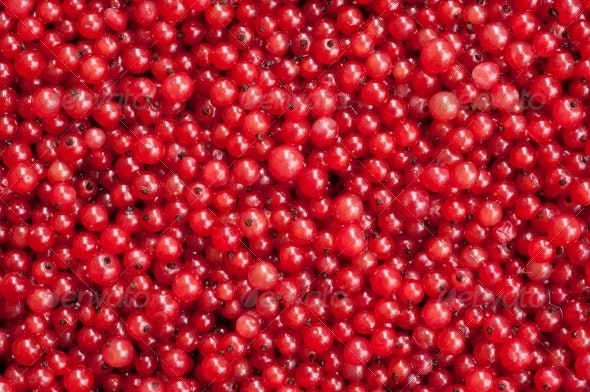 Berries of a Red Currant - Miscellaneous Textures