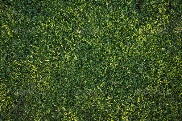 Green Grass - Nature Textures