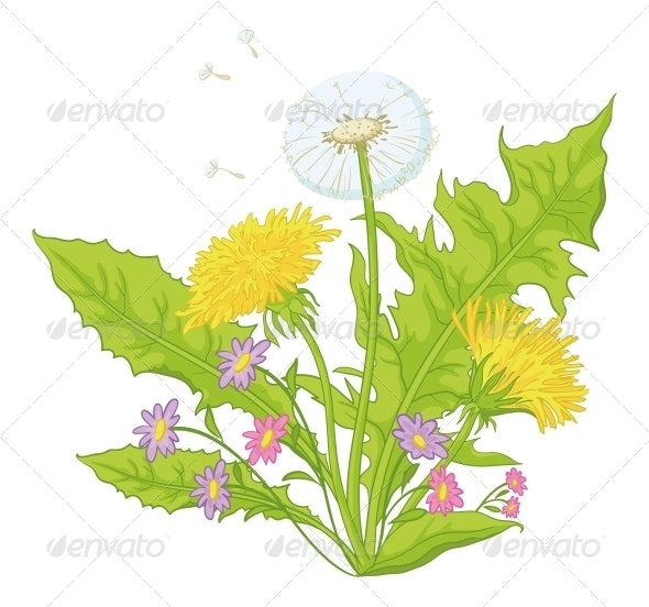 Flowers - Dandelions with Leaves - Flowers & Plants Nature