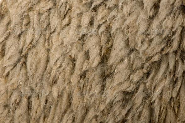 Close-up of Arles Merino Sheep Wool - Nature Textures