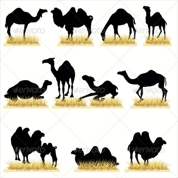 Camels Silhouettes Set