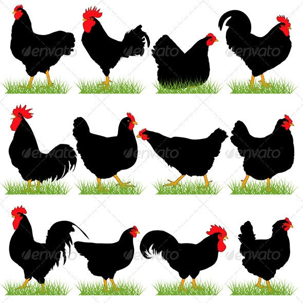 12 Roosters and Hans Silhouettes Set - Animals Characters
