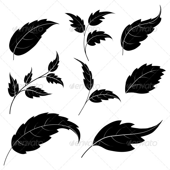 Leaves - Silhouettes - Flowers & Plants Nature