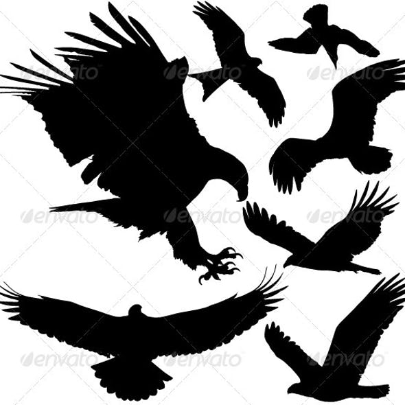 Birds of Prey Vector Silhouettes