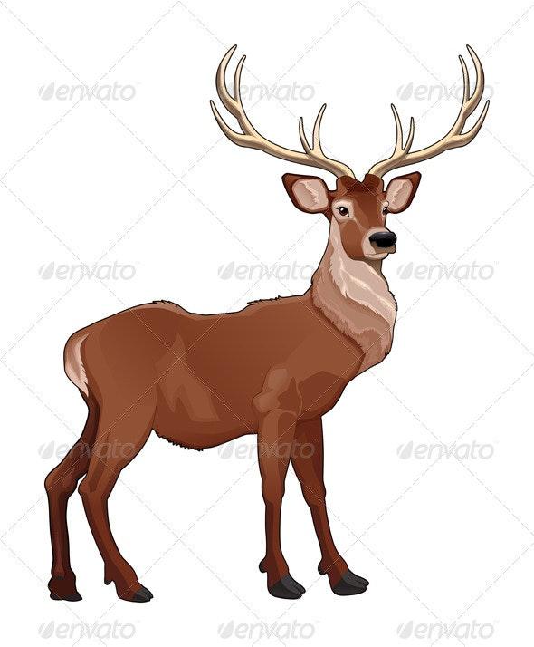 Elegant deer - Animals Characters