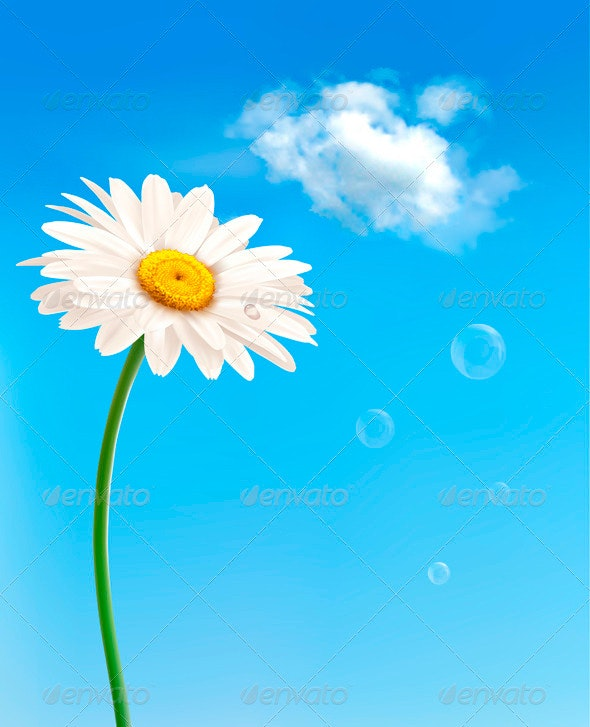 Beautiful White Daisy in Front of the Blue Sky - Flowers & Plants Nature