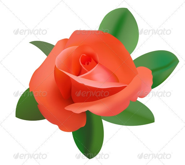 Vector illustration of red rose      - Flowers & Plants Nature
