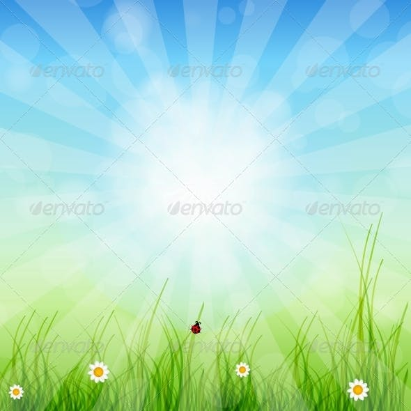 Spring Green Background. Grass and Sun