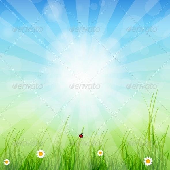 Spring Green Background. Grass and Sun - Miscellaneous Conceptual