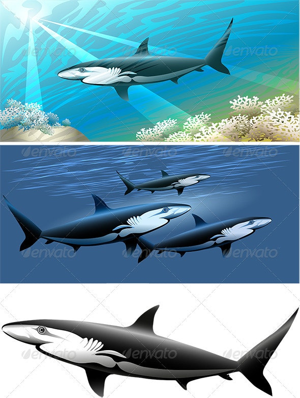 Shark Set - Animals Characters