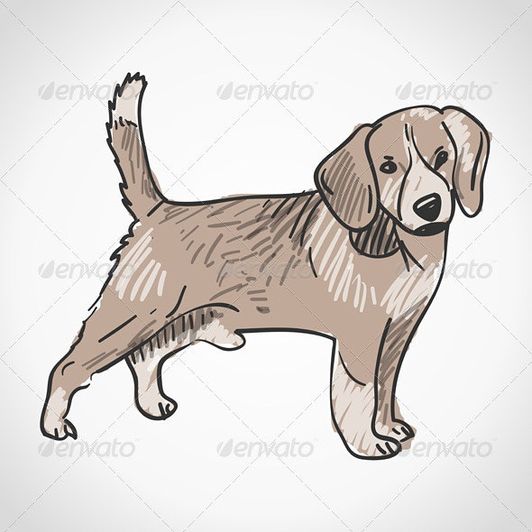 Beagle Dog - Animals Characters