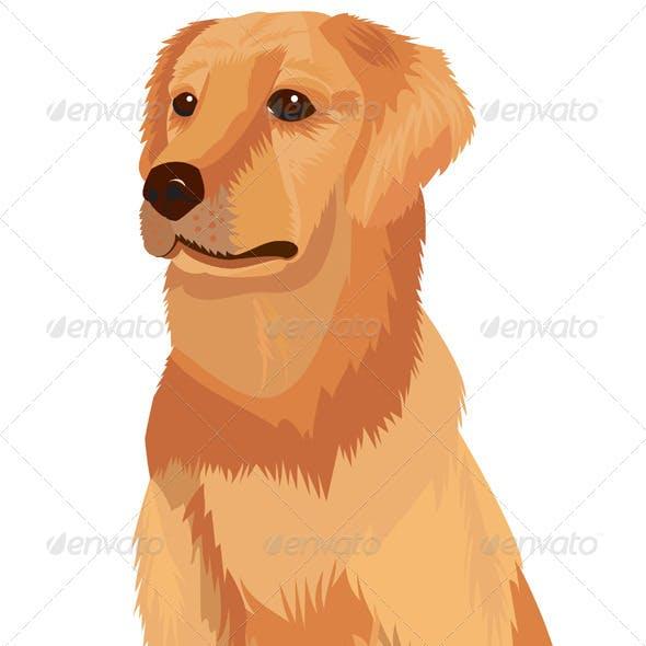 Labrador Retriever, Dog Breed