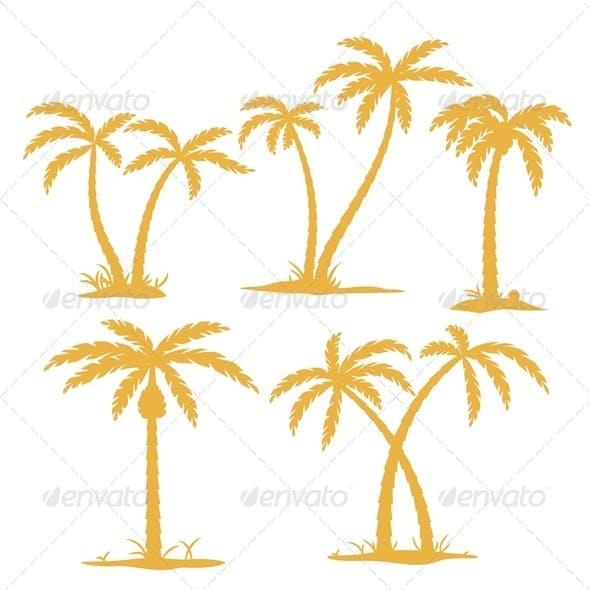 Palm Contours