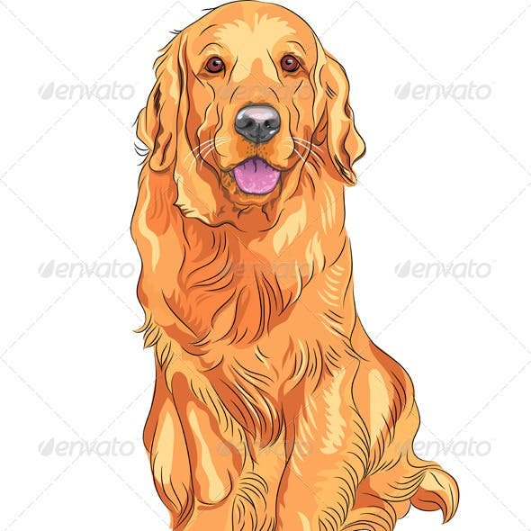 Vector Dog Breed Golden Retriever Sitting