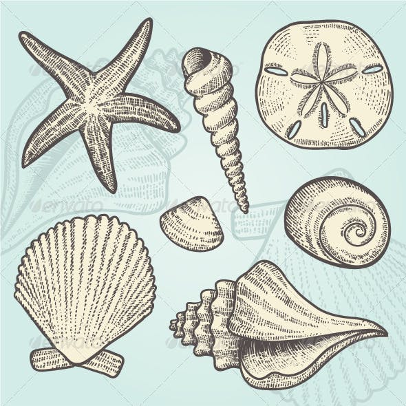 Vintage Beach and Ocean Seashells Vector Elements
