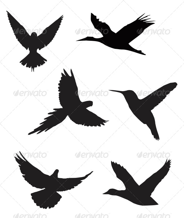 Birds Silhouette Pack - Animals Characters