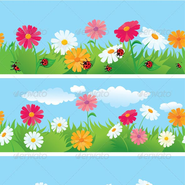 3 Seamless Borders with Ox-Eye Daisy Flowers