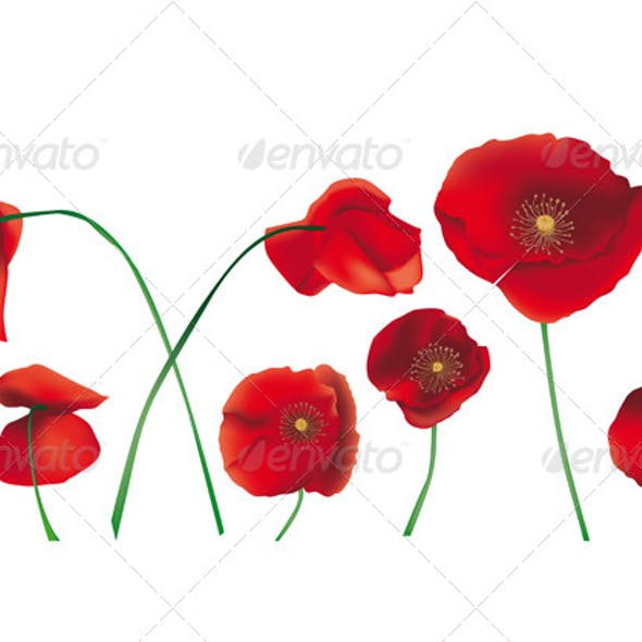 Poppies Isolated