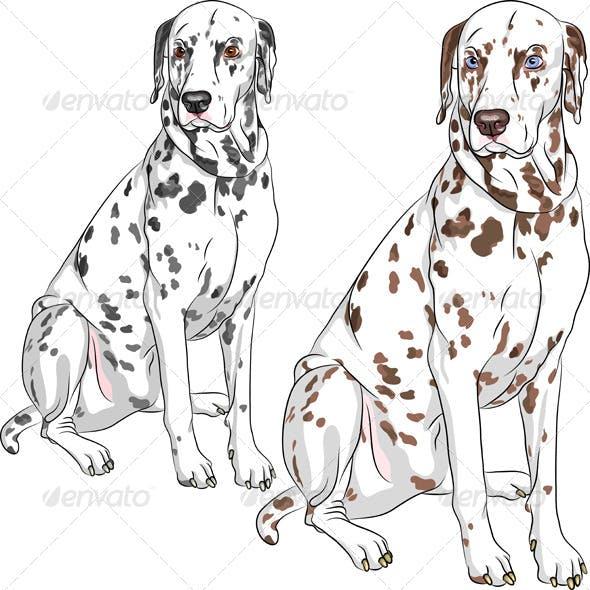 Vector Set Dog Dalmatian Breed