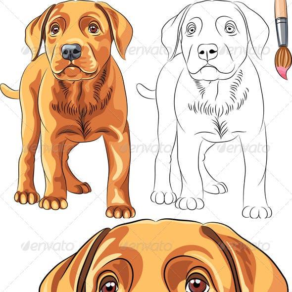 Vector Coloring Book of Labrador Puppy