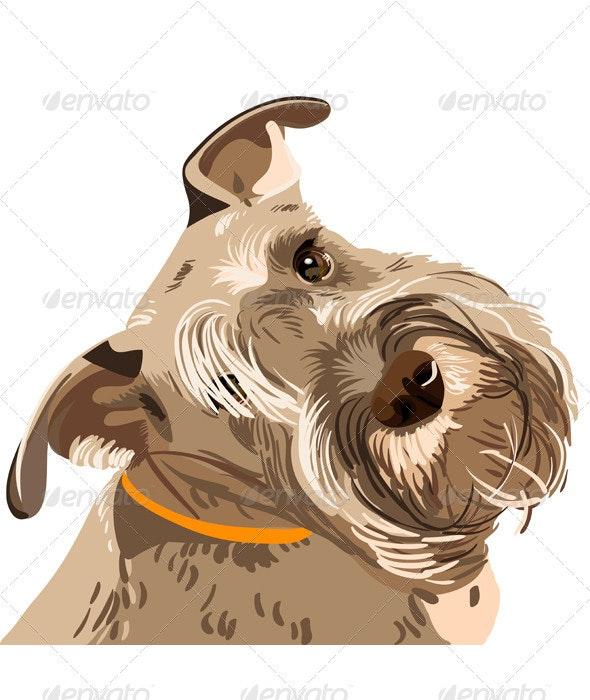 Vector breed Miniature Schnauzer dog closeup - Animals Characters