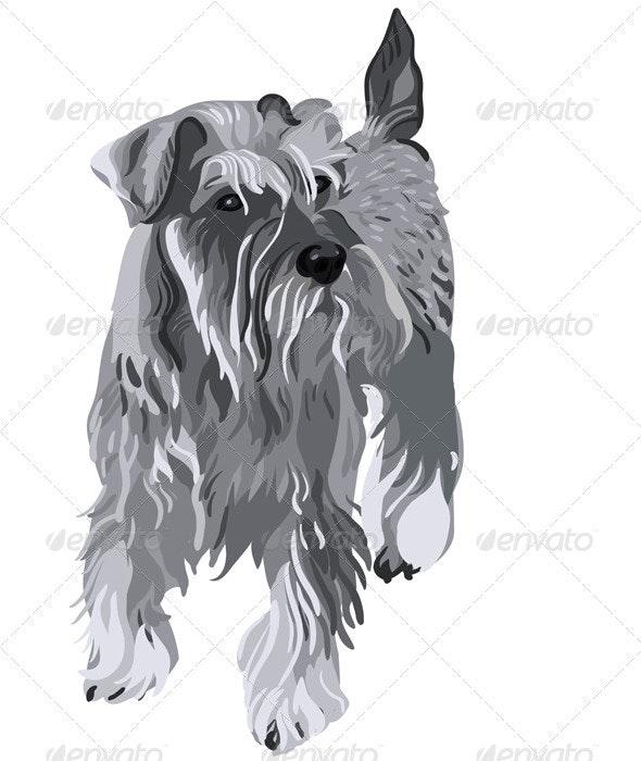 Vector Miniature Schnauzer do - Animals Characters