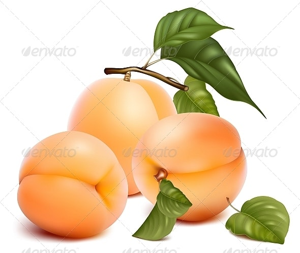 Apricots with Leaves. - Food Objects