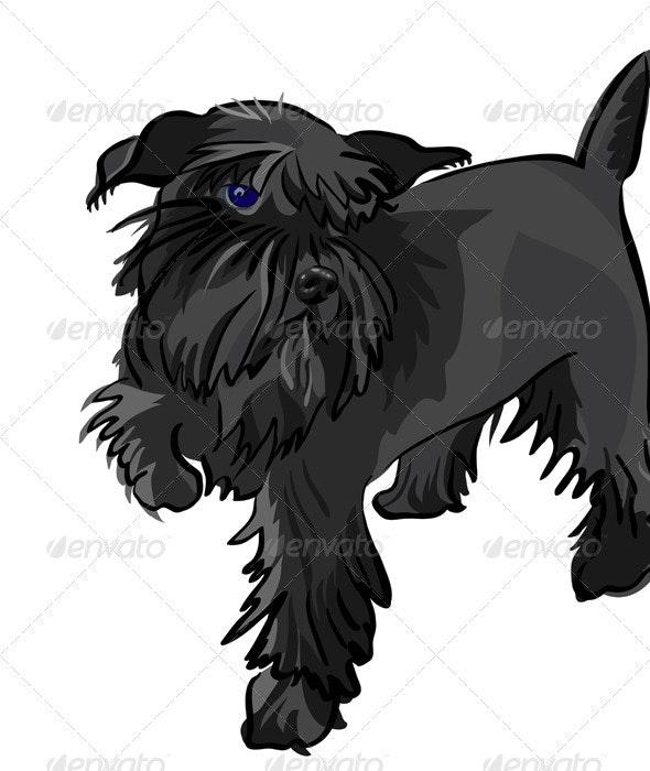 Vector black Miniature Schnauzer dog - Animals Characters