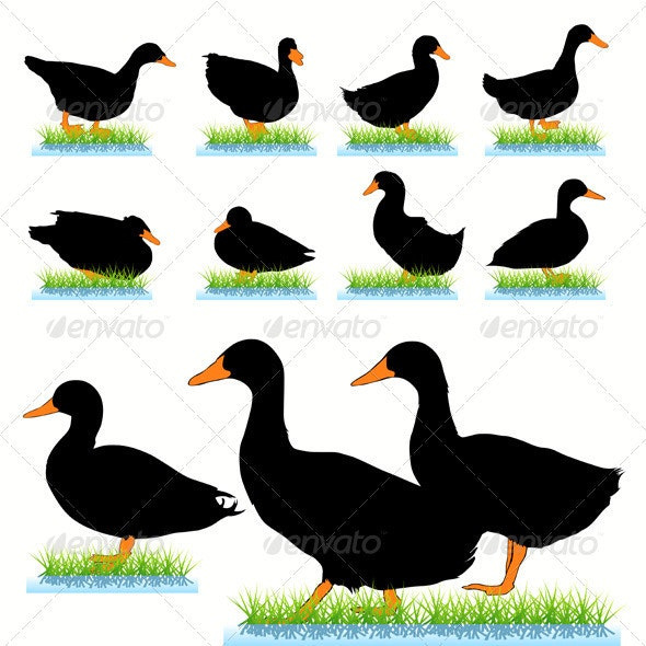 Ducks Silhouettes Set - Animals Characters