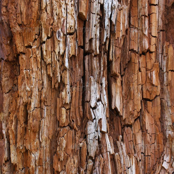 Rotted Tree Bark