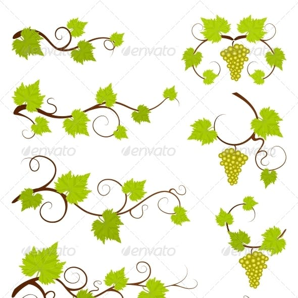 Grape Vines Design Elements Set