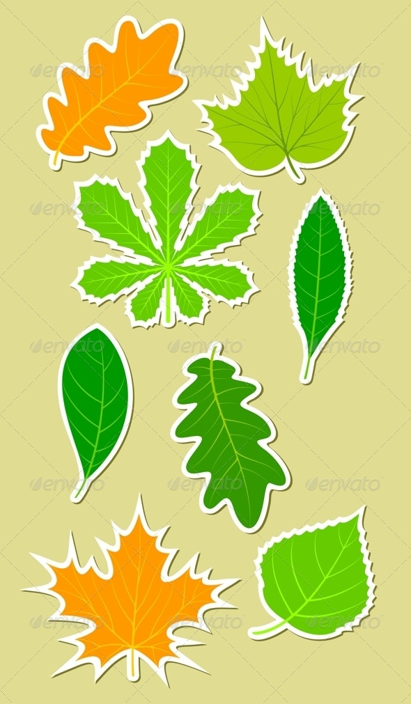 Leaves Of Different Plants By Si1anti Graphicriver