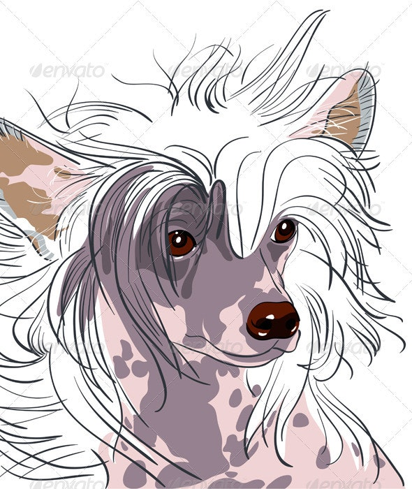 Vector dog Chinese Crested breed - Animals Characters