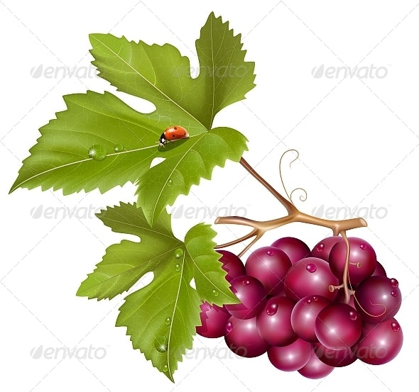 Grape Cluster with Green Leaves and Ladybird - Food Objects