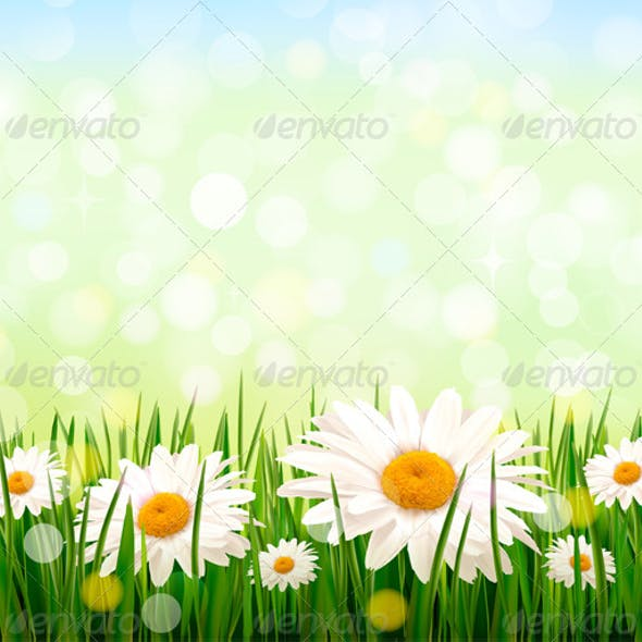 Green Grass and Daisy Background