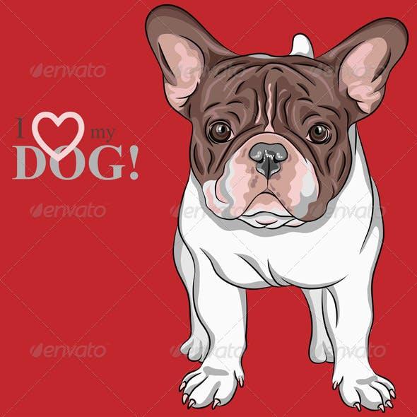 Dog French Bulldog breed