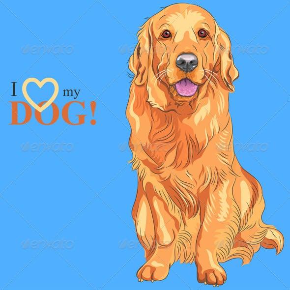 Dog Golden Retriever breed Sitting