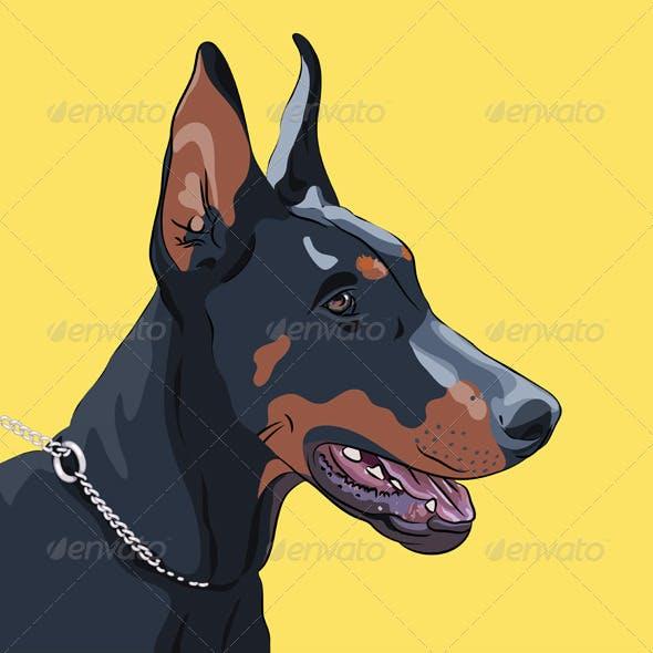 Close-up Serious Dog Doberman Pinscher Breed