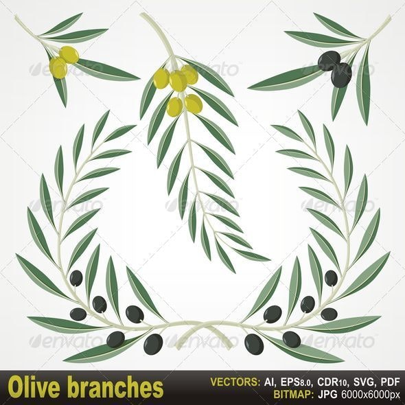 Olive Branches - Flourishes / Swirls Decorative