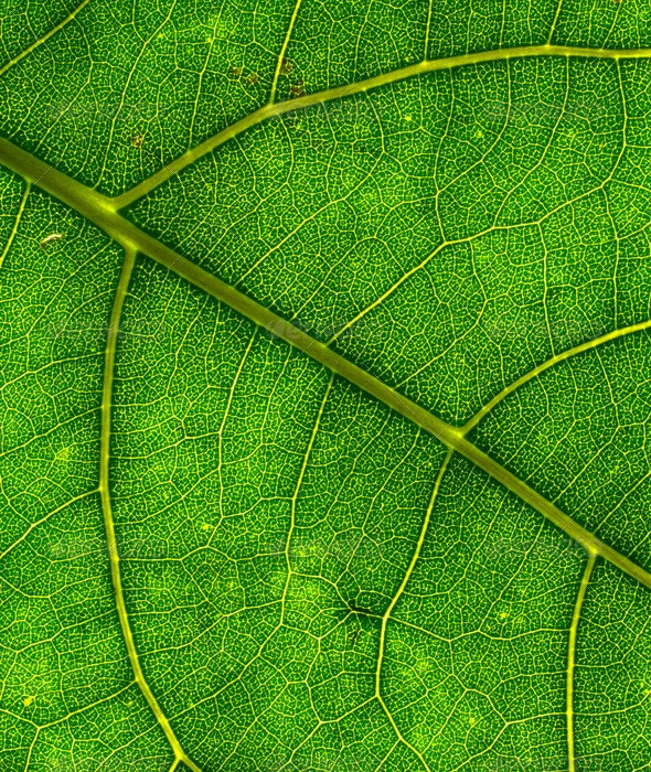 Green Leaf Texture 01 - Nature Textures
