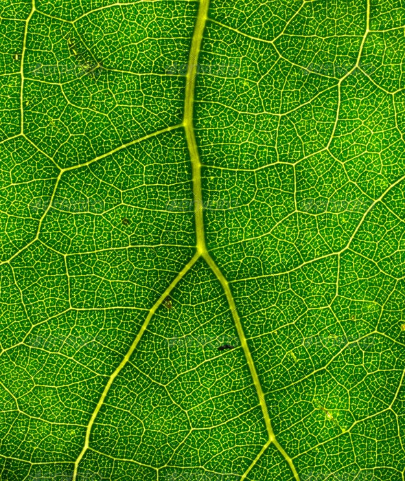 Green Leaf Texture 02 - Nature Textures