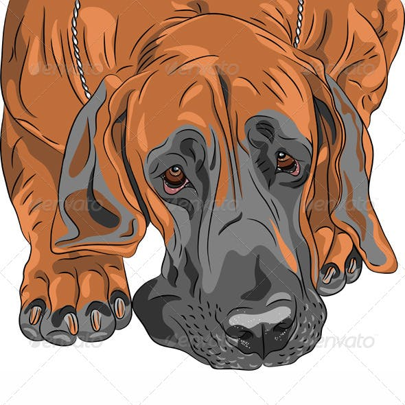 Vector Close-Up Sketch Dog Great Dane Breed