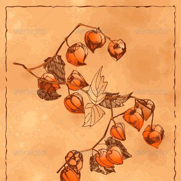 Autumn Background with Orange Physalis