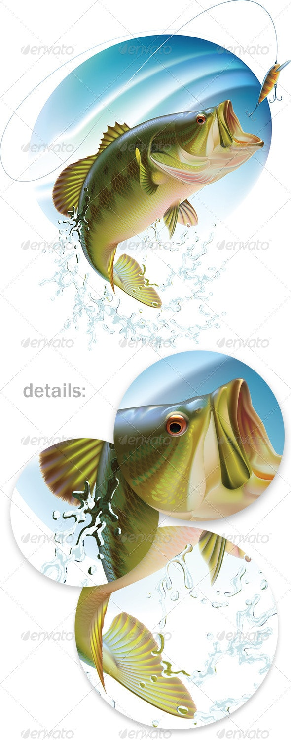 Largemouth Bass Catching a Bait - Animals Characters