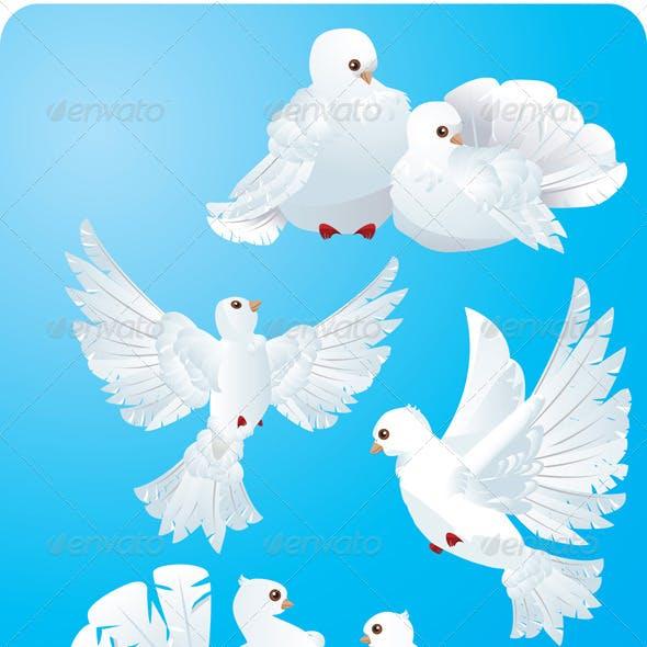 Set of White Pigeons