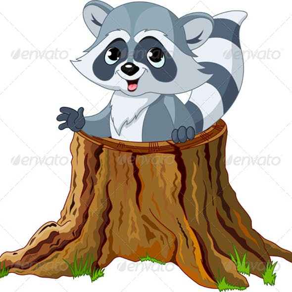 Raccoon in Tree Stump
