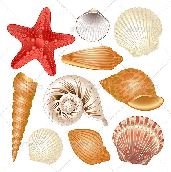 Seashells collection - Organic Objects Objects